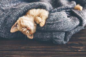 Chat entrain de dormir dans un plaid gris